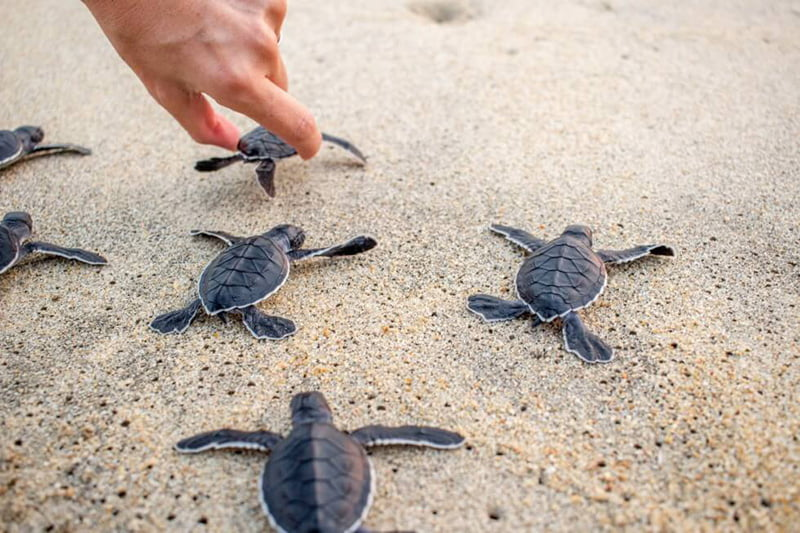 ITIL Training - are we letting the turtles die?