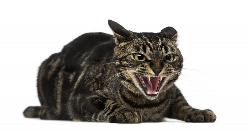 Application management and feral software